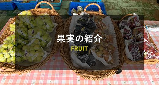 果実の紹介